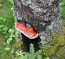 Tree Ear by marybedy