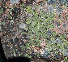 Acadia Granite 9 by marybedy
