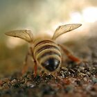 bee's bum by Matt Mawson