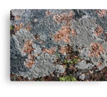 Acadia Granite 25 Canvas Print