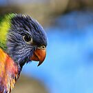 Baby Bird by Donna Keevers Driver