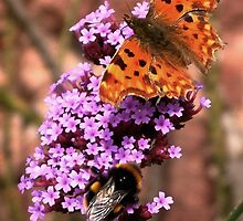 The Butterfly, The Bee and The Buddleia Tree by Yampimon