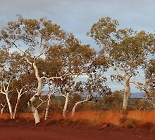 beautiful early morning light by Karijini National Park (sunrise) by gaylene