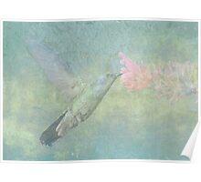 Hummingbird Tune Poster