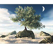 Mystery Tree Photographic Print