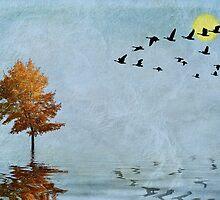 Migration by John Edwards