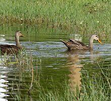 ducks n dragons by aradia63