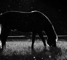 25.7.2014: Horse and Mosquitos III by Petri Volanen