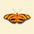 Banded Orange by Mark Podger