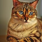 Nala the Snow Bengal by GTdesigns