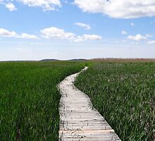 Path in the tall grass by daniellebotto