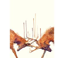 Stags // Strong Photographic Print