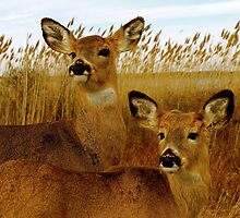 Deer Side by Side by Jamie Greene