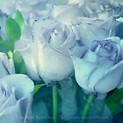 Soft Blue Roses by Stephanie Rachel Seely