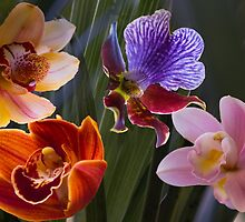 Orchid array by indiafrank