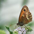 Butterfly on mint by Sara Sadler