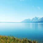 Landscape photography, lake, blue sky and wild plants. Grand Teton National Park. by naturematters
