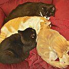 Sleeping cats by Carolyn Clark