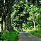 A Scottish summer lane by jchanders