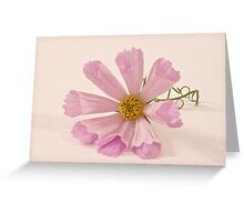 Pink Cosmo - Sea Shell Macro Greeting Card