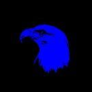 American Bald Eagle by Mark Podger