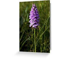 Spotted Orchid, Kilclooney, Donegal Greeting Card