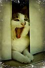 Laughing Cat in the Window by SummerJade
