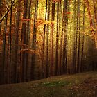 THE FOREST OF THE ANGELS by leonie7