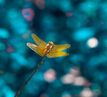 Dragonfly Aglow by Ian McGregor