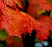 All Leaves Must Fall by AGODIPhoto