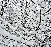 BRANCHES OF SNOW by JoAnnHayden