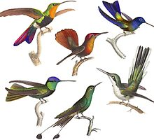 Six Hummingbirds Antique Print by AntiqueImages