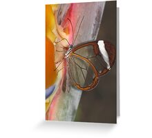 Glasswing 02 Greeting Card