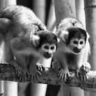Bolivian Squirrel Monkeys at Dublin Zoo  by Martina Fagan