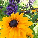 The purple and the Yellow... by RichImage