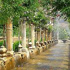 The Arab Gardens Of Alfabia.....................................Majorca by Fara