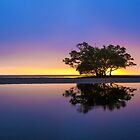 Sunrise Tree and Water Reflections by danwilson