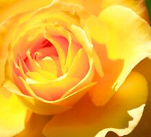 Yellow Rose Close Up, Yellow Petals close Up Fine Art by lifetravelphoto