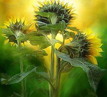 Sun Worshipers by Carol  Cavalaris