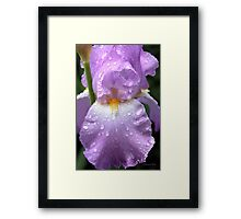 Rain Catcher Iris ~ A Pretty Wet Flower Framed Print