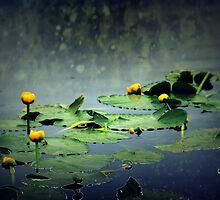 lily pads in the rain at Vernonia Lake by Dawna Morton
