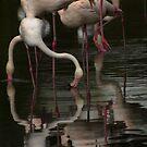 More Flamingos by ajgosling