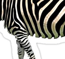 a slice of zebra Sticker