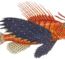 Pterois - Lionfish by AntiqueImages