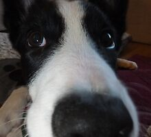 close up collie by Elaine Carty