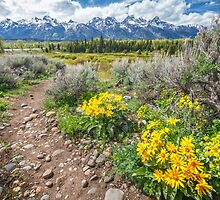 Spring trails through the Grand Tetons by Owed to Nature