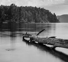 Down by the lake by Mark Williams