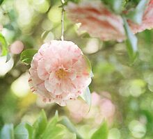 Pink and White Camillia on Green  by BrookeRyanPhoto