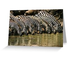 Eyes on the lineup along the Grumeti River Greeting Card