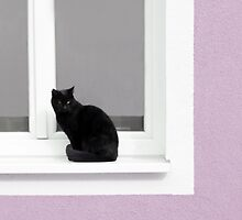 Black Cat in the Window on Lilac by BrookeRyanPhoto